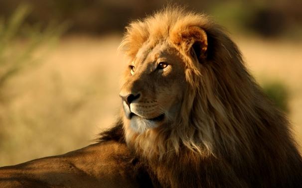 The big 5 in Kenya wildlife reserves
