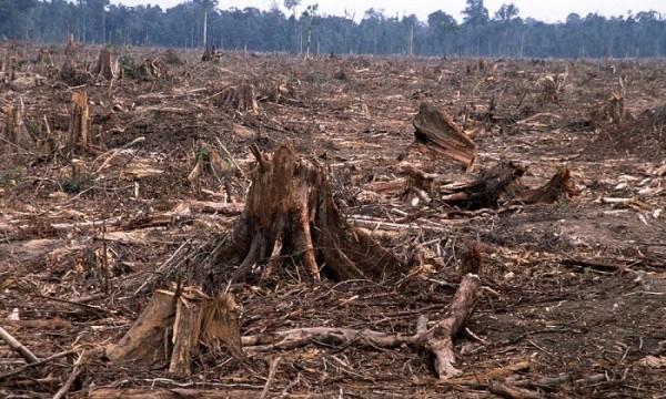 Deforestation is a major issue in Kenya