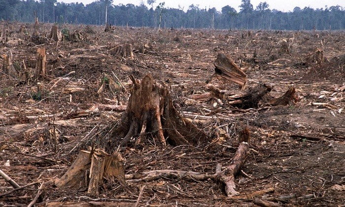 Deforestation is a major issue in Kenya