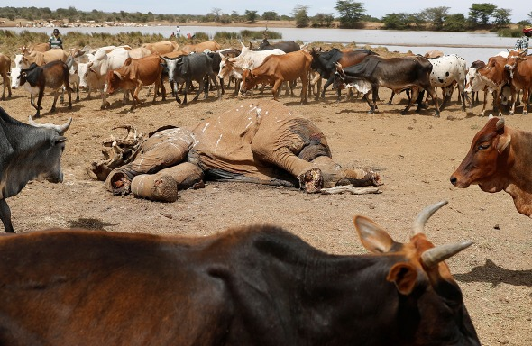 Elephant dies in North Eastern Kenya due to drought after Mau Catchments were cleared for settlement. Bad leadership in Kenya