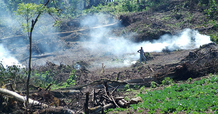 with the current deforestation rate Kenya will soon be a desert. Bad leadership in Kenya- third eye blogs