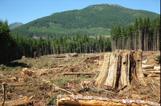Over 40% of Mau Forest has been cleared